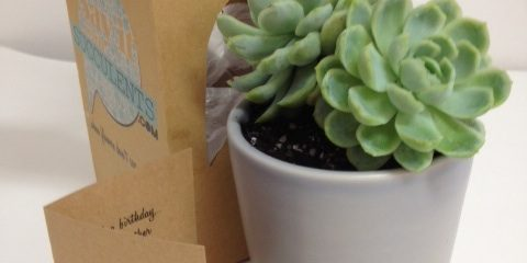 Why not say it with succulents?