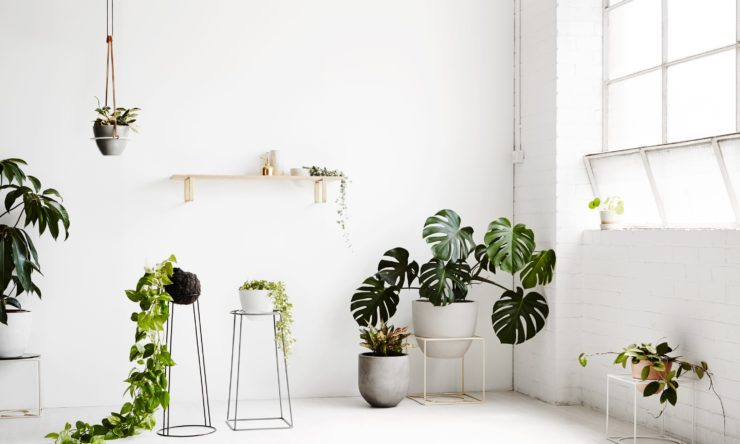 Display your house plants in style with Ivy Muse's latest