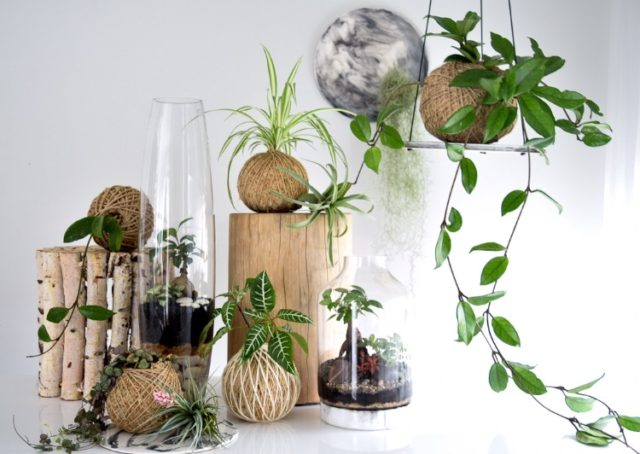 the art-house series exclusive to rachel bainbridge art + glasshouse terrariums