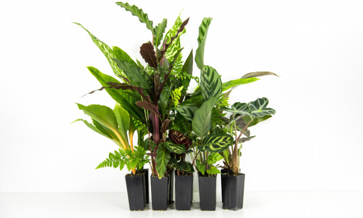How to keep your indoor plants alive: Go easy on the water!