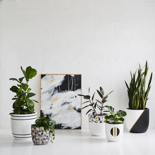 Get 20 Off Design Twins New Palm Springs Pots The
