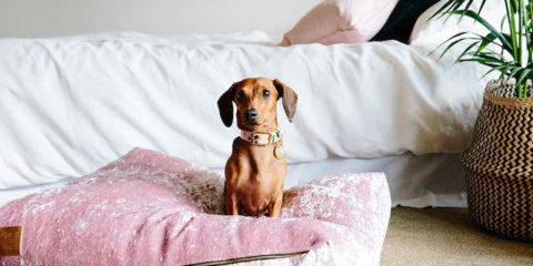 Nice Digs: making living with pets more attractive