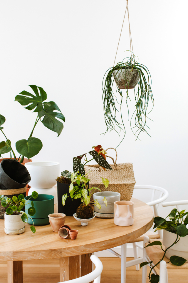 Leaf Supply studio