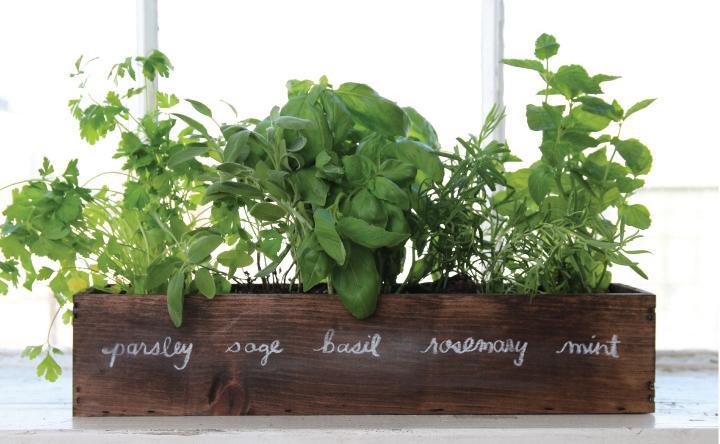 Window will herb garden