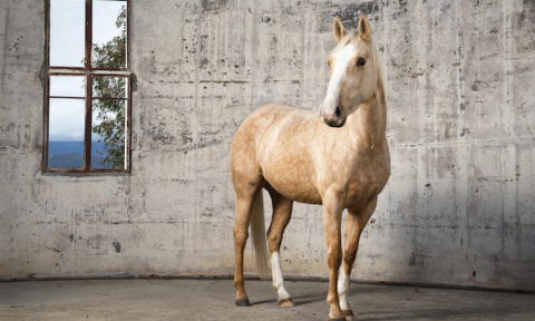 Artist profile: Grace Costa's regal horse photography