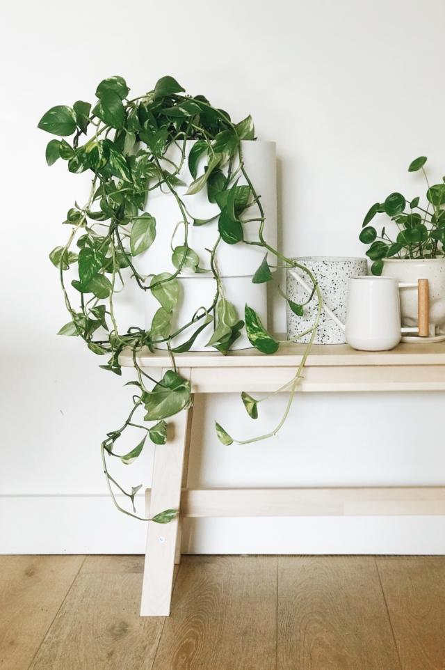 Plantas de casa: dicas de cuidados com o inverno para mantê-las prósperas! 29